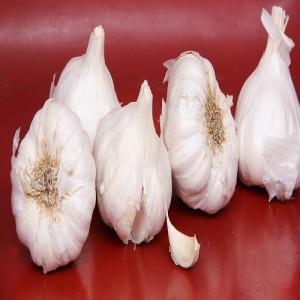 Fullgola Garlic