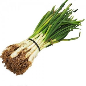 Calcot Onion