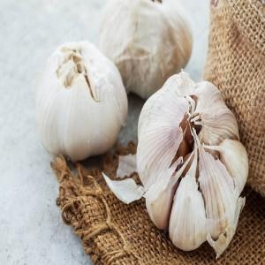 Old Garlic