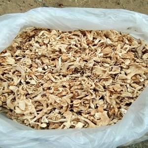 Mushroom Distributorship