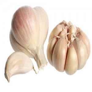 Fresh Commission Garlic