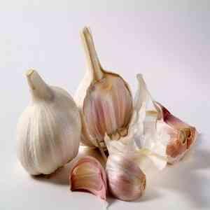 Machine Grading Garlic
